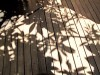 Madagascar - Tananarive : notre pension (jardin)