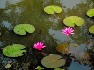 Cambodge - Angkor : Banteay Srei, douves