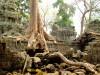 Cambodge - Angkor : Ta Phrom