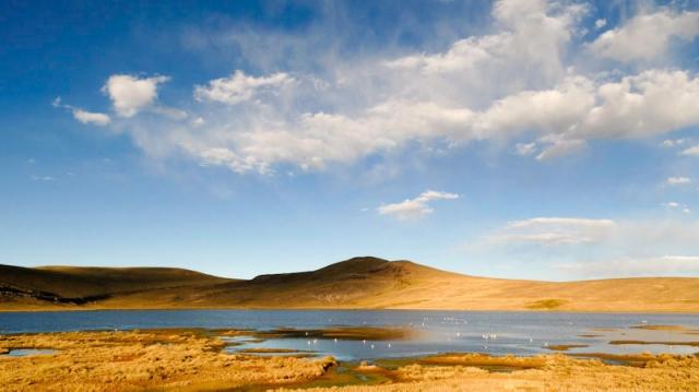 Pérou - route Arequipa-Puno : Altiplano - flamands roses
