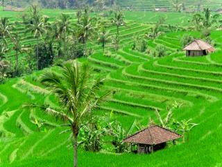 Indonésie - Bali - sur la route pour Lovina : Jatiluwih