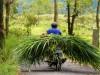 Indonésie - Bali : balade aux alentours de Toya Bungkah