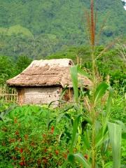 Indonésie - Bali : Sidemen