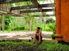 Indonésie - Bali : Sidemen, au ghost resort
