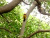 Inde - Chandigarh : oiseau magnifique