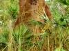 Australie - Parc national de Litchfield : termitières