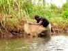 Madagascar - Manakara : canal des Pangalanes (pêche à la crevette)