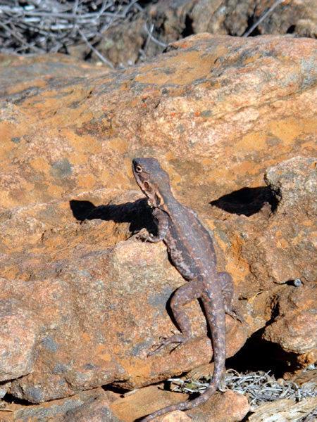 Australie - Flinders Ranges : copain de casse-croute