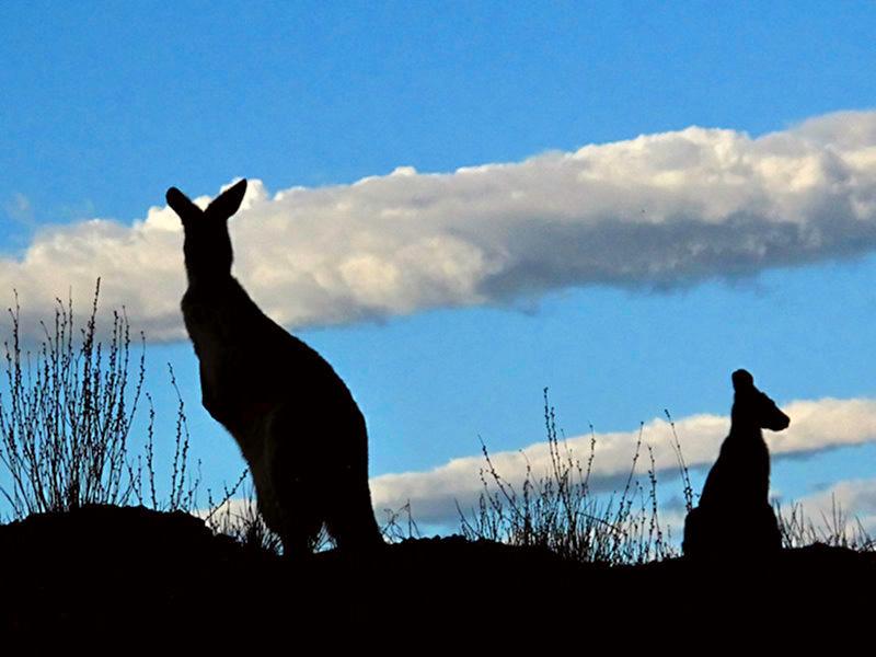 australie-flindersranges-0102