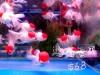 Hong Kong : Fish's market