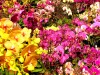 Hong Kong : Flower's market