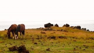 Chili - Ile de Pâques : cote ouest