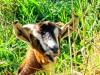 Nouvelle Zélande - animal sauvage de la forêt !