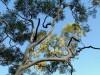 Australie - Kings Canyon : Rim walk