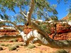 Australie - Kings Canyon : Rim walk