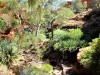 Australie - Kings Canyon : Rim walk (Eden garden)
