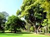 Australie - Melbourne : au Jardin botanique