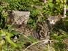 La famille chats du Perche