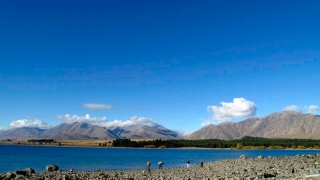 Nouvelle Zélande - Lake Tekapo