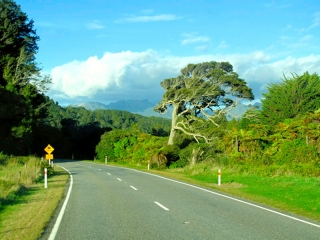 Nouvelle Zélande - on the road : vers Tauranga Bay