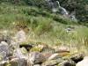 Nouvelle Zélande - Fox glacier NP : rando