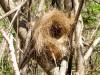 Madagascar - Isalo : nid d'oiseau