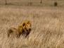 Parc national de Serengeti