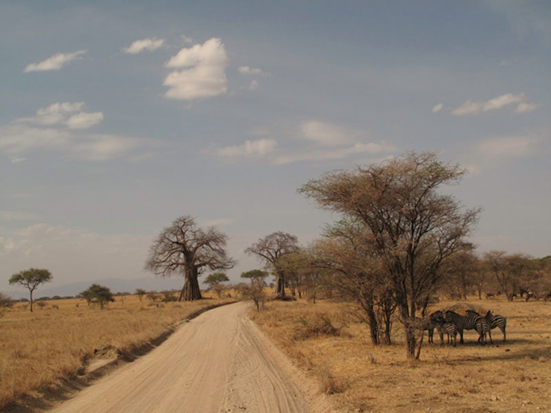 Tarangire : on the road !
