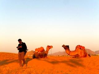 Inde - Puskar : ballade en chameaux