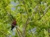 Madagascar - Tsingy de Bemaraha : oiseau