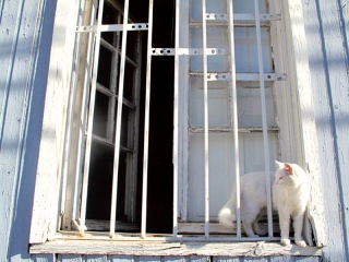 Chili - Valparaiso : un joli chat