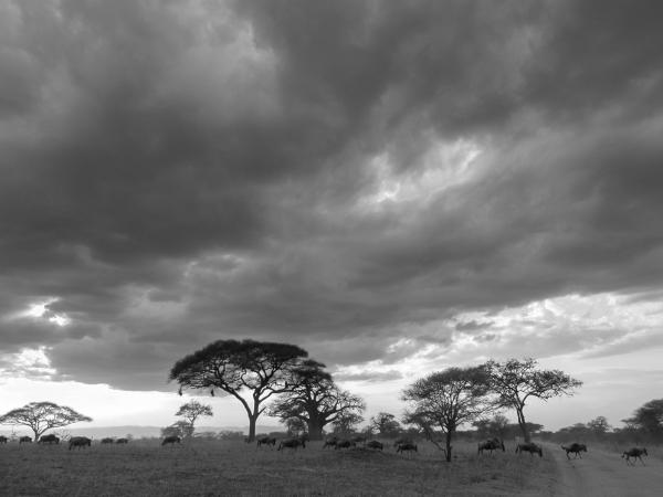 Tanzanie : Serengeti