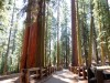 USA - Sequoia NP