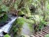 Australie : Parc national des Blue Mountains