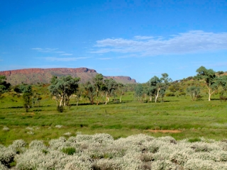 Australie - The Ghan : paysage avant Alice Spring