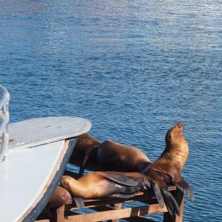 USA - Côte Pacifique : Monterey