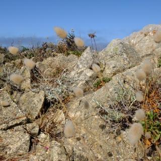 USA - Côte Pacifique : Réserve naturelle de Point Lobos
