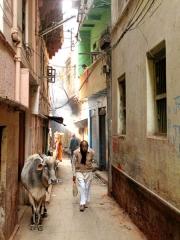 Inde - Varanasi : scène de rue
