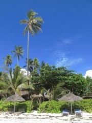 Zanzibar - Matemwe : notre plage